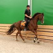 Hanoverian gelding with German breeding