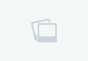 QUARTER HORSE - Cuarto de Milla en venta en Cataluña | Venta de Caballos