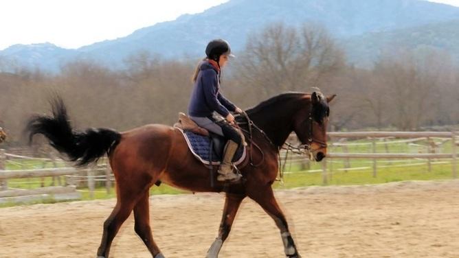 Busco trabajo en madrid en venta en comunidad de madrid venta de caballos - Busco trabajo de pintor en madrid ...