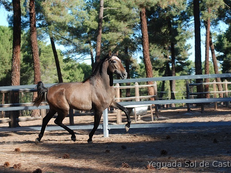 JUST 3 YO PRE, HUGE MOVER, SUPER-CLASS, IMPRESSIVE PARENTH TREE, CHECK OUT HIS VIDEO