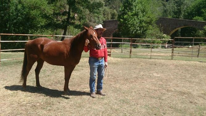 YEGUA QUARTER HORSE LINEAS WORKING COW HORSE