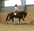 Amazing black gelding for sale ! en venta