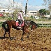 Se vende caballo PSI