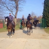 WANTED: Two DRESSAGE RIDER for a dressage/breeding stable in East...