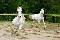 El significado del caballo blanco en diferentes culturas