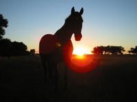El triste destino de cinco mil caballos en España cada mes