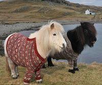 Escocia promociona la isla de shetland mediante sus ponis for Oficina de turismo de escocia